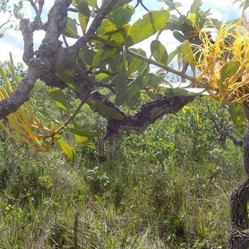 Biodivercidade do Cerrado Brasileiro