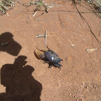 Biodiversidade do Cerrado