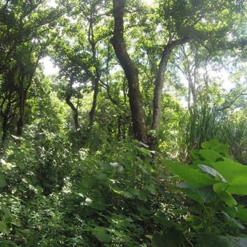 Corrida em trilha Distrito Federal